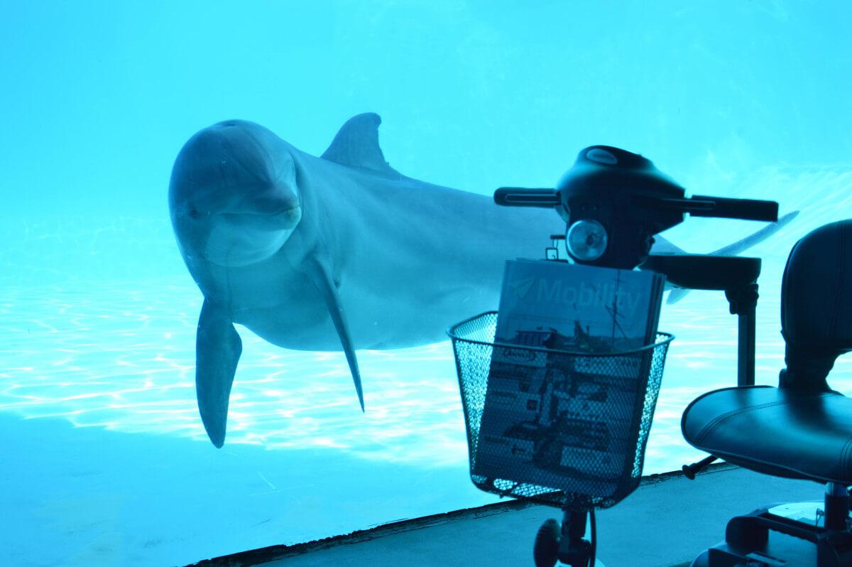 piscina delfini 3_low